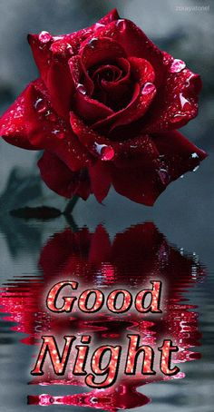 Good Morning Love Gif, New Good Night Images, Good Night Love Messages, Good Morning Roses, Good Night Prayer, Cute Good Night, Good Night Blessings, Good Night Greetings, Good Night Gif