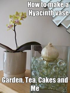 How to make a Hyacinth vase for a Christmas Flowering Hyacinth #tutorial #gardening #flowers http://www.gardenteacakesandme.co.uk/2014/10/plant-hyacinth-bulbs-christmas-xmas.html