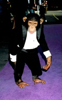 """Michael's Chimpanzee """"Bubbles"""" in a Tuxedo, being Michael's Chimp her could afford to dress well."""