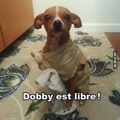 tongue twisters from harry potter Dobby Elfo, Funny Animal Pictures, Funny Animals, Harry Potter Dog, Movie Bloopers, Free Dobby, Dog Smells, Daily Funny, Funny Times