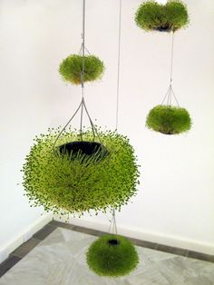 hanging flower pots - chia seeds. mexico @ moma