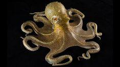 ommon octopus (Octopus vulgaris), by Leopold and Rudolf Blaschka.