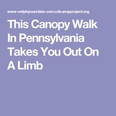 This Canopy Walk In Pennsylvania Takes You Out On A Limb