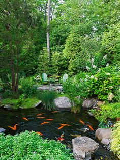 Backyard water garden with a fully stocked koi pond to provide a relaxing diversion.