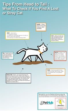 Tips From Head To Tail What To Check If You Find A Lost Or Stray