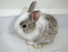 I love this bunny! Its so cute!