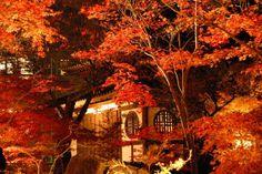 'Light Up' at Eikan-dō Zenrin-ji Temple, Kyoto | &#xA9…