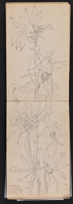 Sketchbook of travels in Scotland and a tour to Kent: pp. 24 - 25 Plant study, Langside, Glasgow 1895 Charles Rennie Mackintosh.