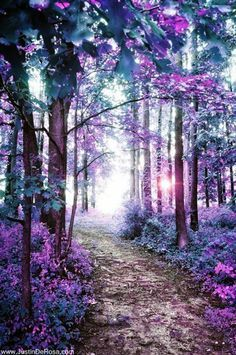 Fascinating Photographs of Forest Paths to another world (24)