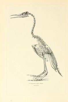 Bd. 6 - Brehms Tierleben. - Biodiversity Heritage Library