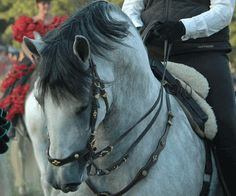 I want this for my horse, just like that: Brwon with GOLD! Because my horses har the gold horses! <3