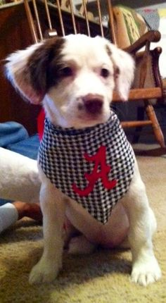 My sweet dog is ready for football! ROLL TIDE ROLL