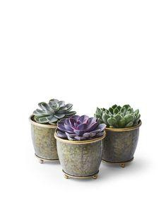 Rosetturt, sukkulent Echeveria, Jessie, Indoor Plants, Planter Pots, Traditional, Inside Plants