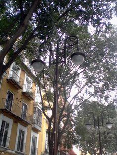 Farola entre árboles..