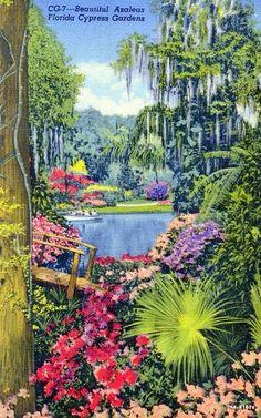 Vintage Cypress Gardens postcard