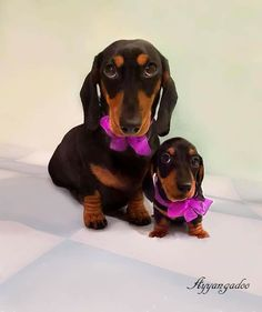 """Learn additional relevant information on """"Dachshund dogs"""". Look at our website. Dachshund Puppies, Weenie Dogs, Dachshund Love, Daschund, Dachshund Clothes, Doggies, Dog Training Methods, Basic Dog Training, Cute Dogs"""