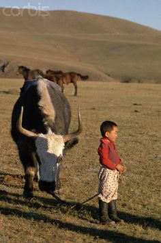 A young boy holds a rope tied to a large bull ox, on a grassy plain of rural Mongolia. (V)
