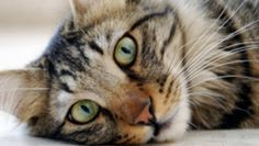 British biologist says cats were never bred for companionship the way that dogs were