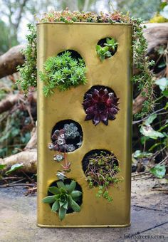 Gardening Project: Gold Succulent Planter. Recycle a large metal can into a modern succulent planter.