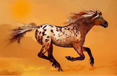 An Appaloosa Called Ginger'...