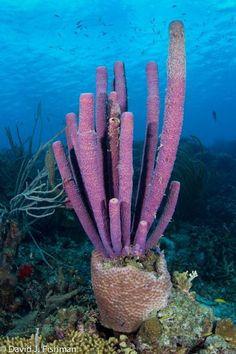 Las Mejores 81 Ideas De Corales De Mar Corales De Mar Coral Arrecifes De Coral