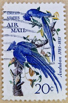 u.s. airmail stamps USA 20c White-throated Magpie-Jay (Calocitta formosa, Geai à face blanche) John James Audubon (1785-1851)