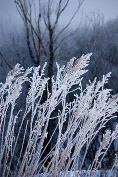 Frost by s.sawada - Satoshi Sawada, pantone serenity, dusty blue, smoky blue