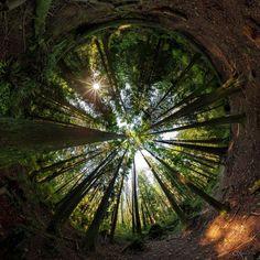 Upwards, Stanley Park in Vancouver, BC [OC] [OS] [1536x1536] (Desktops inside) - Imgur