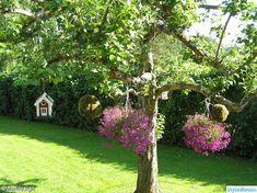 Äppelträd Pergola, Home Improvement, Arch, Outdoor Structures, Plants, House, Image, Spa, Gardening