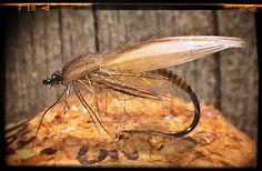 Caddis! #barbless #dryflyfishing #dryordie #flugfiske #Fluefiske #flytying #flyfishing #fluebinding #deercreekresin #flytyingaddict #flytyingjunkie #caddis #caddisfly #CaddisFaction #vårflue #CatchandRelease #graylingfood #graylingflies #troutfood #troutflies #nattslända #akitahooks