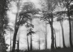 mist by YilmazKendirli #nature #mothernature #travel #traveling #vacation #visiting #trip #holiday #tourism #tourist #photooftheday #amazing #picoftheday