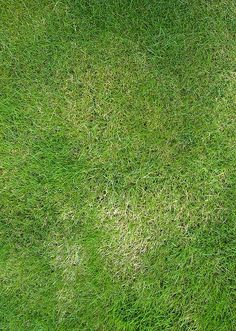 Beautiful Grass Texture Seamless