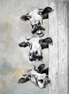 The Farm Animals Pencil Drawing 29 - Art Cow Kitchen Decor, Cow Decor, Cow Wall Art, Cow Art, Animal Paintings, Animal Drawings, Paintings Of Cows, Cow Drawing, Drawing Ideas