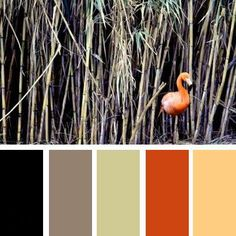 Black, pastel green and orange color schemes for modern interior decorating with bright contrasts