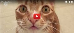 Cats See Things Differently From Humans