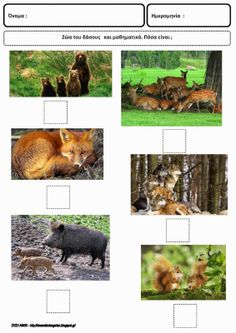 Forest Theme, Activities, Education, Drawings, School, Crafts, Animals, Animales, Animaux