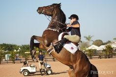 George Morris 1/2/2013 Horsemastership Training Session...  Resistance to the right leg! George is The. Man.