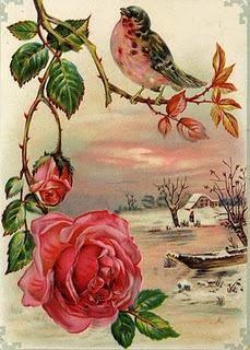 MEDITANDO...  No meu galhinho, Eu medito sozinho, Pois sou passarinho, E a brisa, vem de mansinho, Suave a me sussurrar; Nunca pare,passarinho de cantar.  Serena ( calma e tranquila)