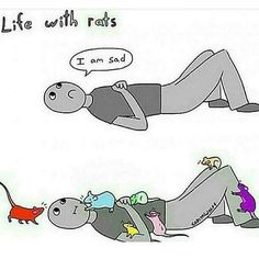 Life with Rats.     Same with mice