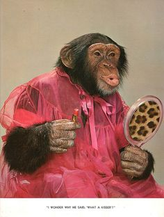 Chimp Chat, photographed by Theda & Emerson Hall. This book is all photos of dressed-up chimps. Monkey See Monkey Do, Monkey Art, Funny Monkey Pictures, Cute Pictures, Animals And Pets, Funny Animals, Cute Animals, Dog Cages, Mundo Animal
