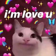 cat memes laughing so hard . cat memes laughing so hard hilarious . Cute Cat Memes, Cute Love Memes, Funny Love, Funny Cats, Funny Animals, I Love U Meme, Memes About Love, Memes Humor, 100 Memes