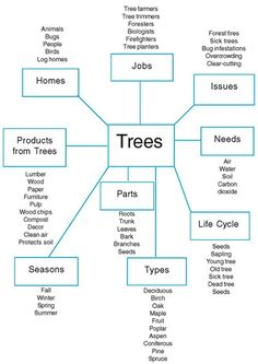Figure 1. Planning web of the Tree Project created by the teachers.  5-7 yr olds…