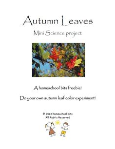 Learn about leaves with this FUN FREE Mini science project!