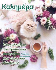 Good Morning, Kai, Greek, Travel, Animals, Buen Dia, Viajes, Animales, Bonjour