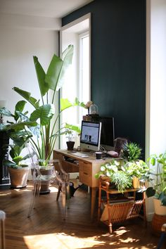 plants and a work station...