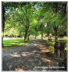 # park #garden #forest #tree #plzen #pilsen #plzeň #czech #cesko #česko #ceskarepublika #czechrepublic #czechia #2017 #sun #today #myphoto #mycity #photo #photography #photos #travel #trip