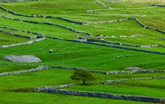 Yorkshire Dales limestone country on the way to Malham Cove.  Drystone walls - and spot the medieval strip farming.