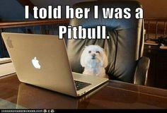 Le dije que era un Pitbull