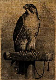 Hawk Hunting Birds of the World Series Digital Image by Graphique, $1.00