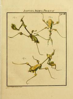 D.2,pt.2 - De natuurlyke historie der insecten; 1764  preying mantis species